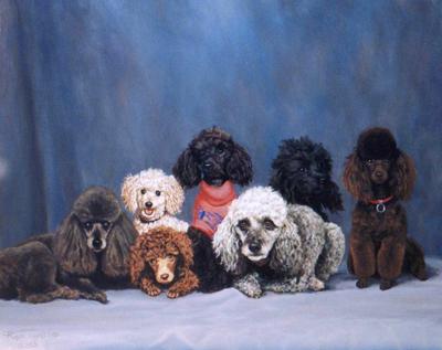 Poodles 60cmx50cm