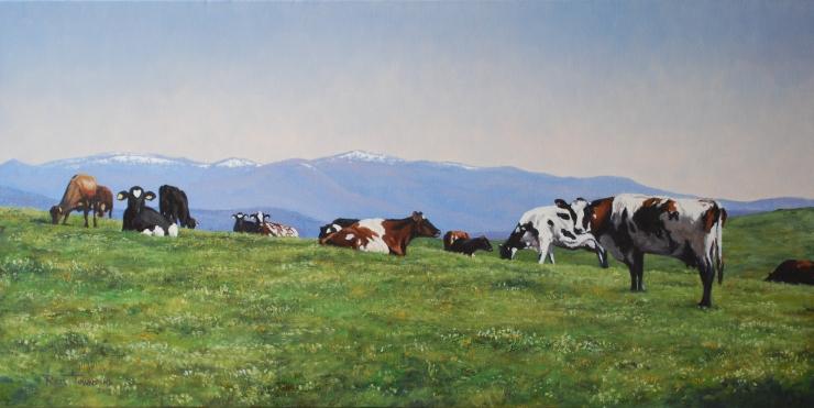 Plenty Cows in Tassie